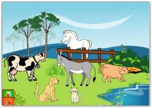 Plantas y Animales   EL RINCN DE INFANTIL